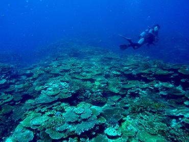 宮古島 サシバ沖 サンゴの群生