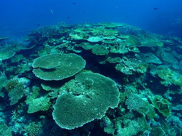 宮古島 イーストコーラル サンゴの群生