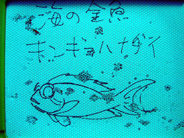 宮古島 クリスタルパーク キンギョハナダイ
