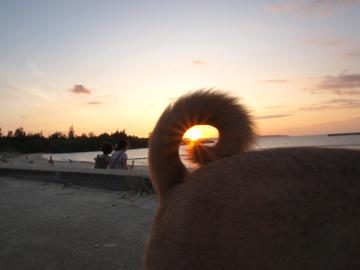 宮古島 パイナガマビーチ ビビ