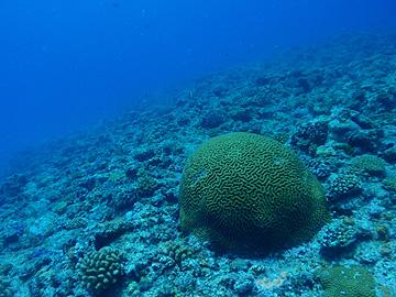 宮古島 クロスホール サンゴ