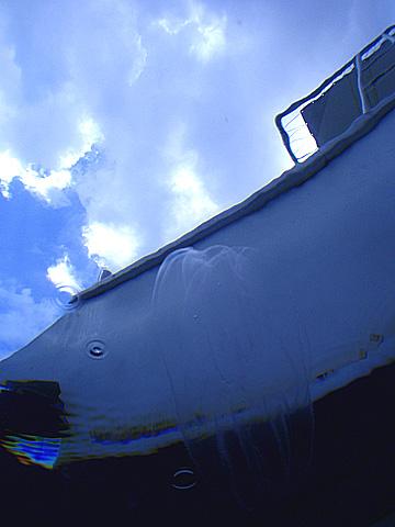 宮古島 中の島ホール クラゲ