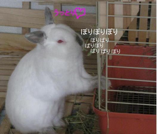 縺ス繧翫⊃繧垣convert_20090723201122[1]
