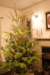 italy tree