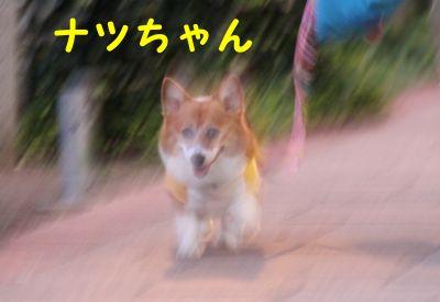 20090805-10.jpg