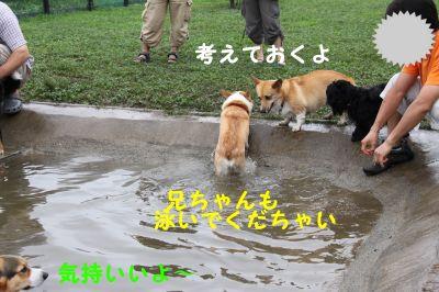 20090815-9_400.jpg