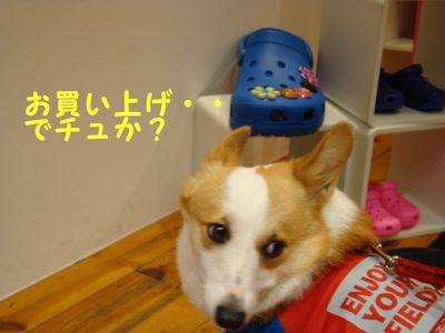 20090817-23_400.jpg