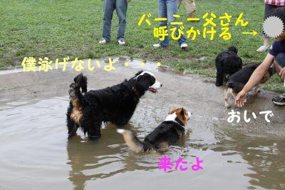 20090817-31_400.jpg