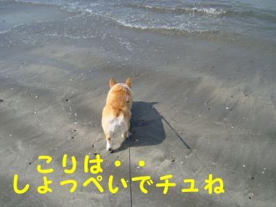 20090915-2.jpg