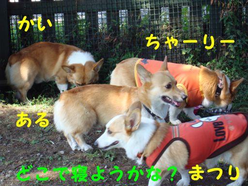 20090926-45_512.jpg