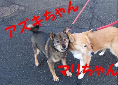 24日アズキ・マリ