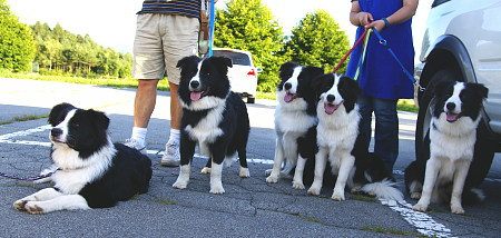 丘の公園子犬集合1