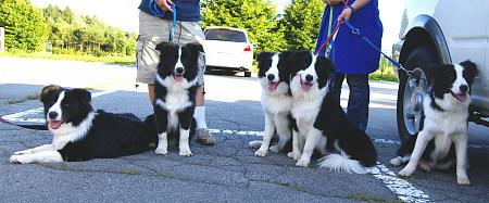 丘の公園子犬集合2