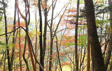 大峰奥駈道への登り・尾根1