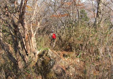 丸塚山へ続く尾根道