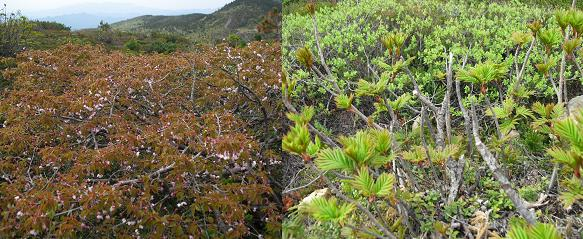 8 登山道の植物