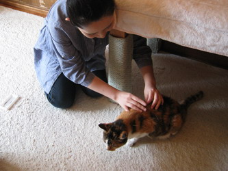 動物 鍼灸