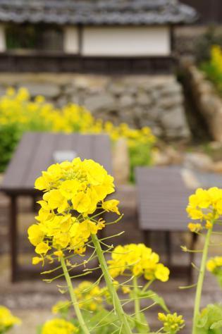 休憩所と菜の花