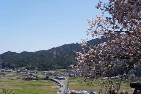 百年桜と街並み