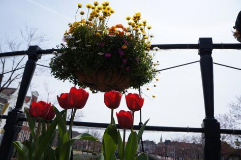 チューリップと花運河