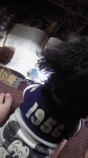 編み物邪魔するレミ