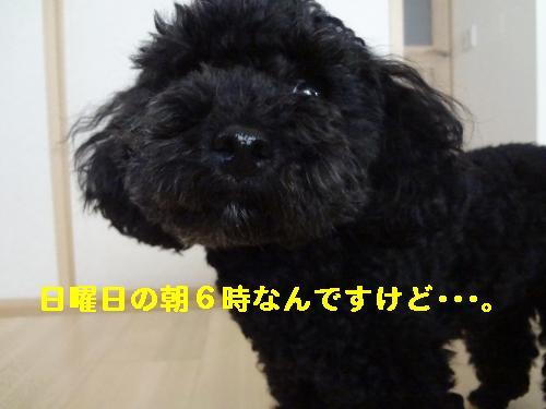 DSC04600_convert_20120418213349.jpg