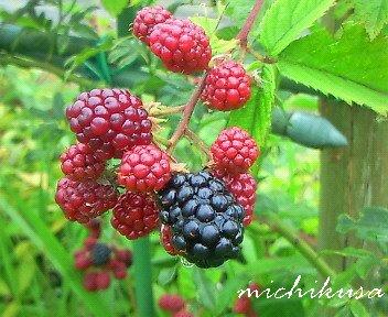 090726raspberry