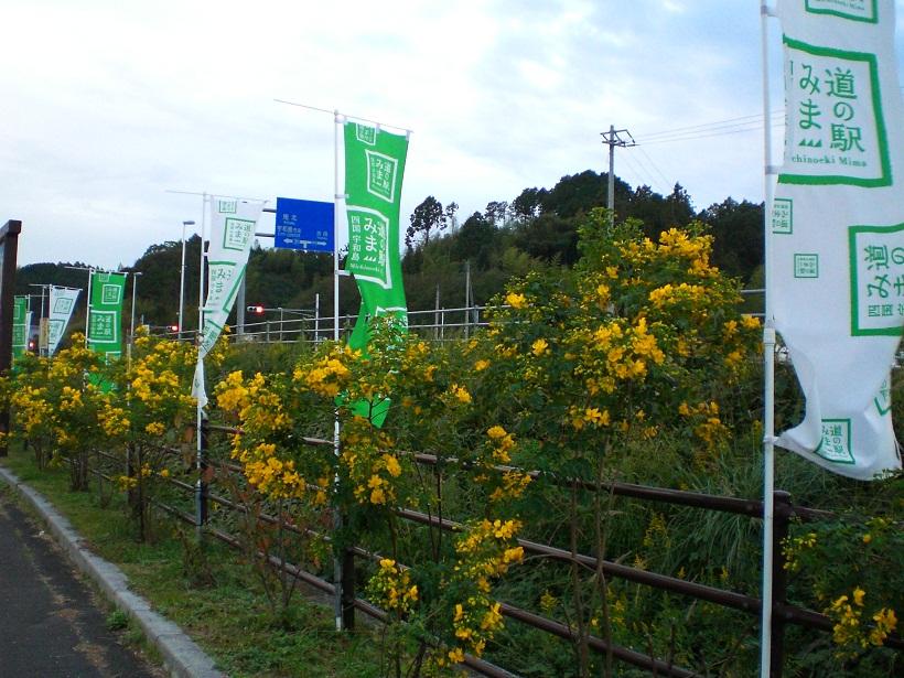 20111104-5.jpg