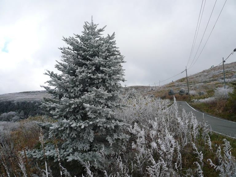 20111211-4.jpg