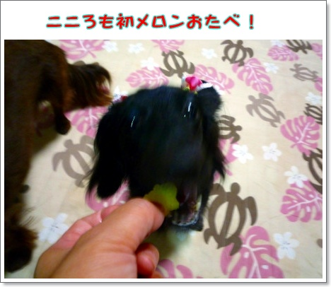 けーき4P1120367