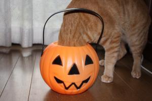 かぼちゃみい