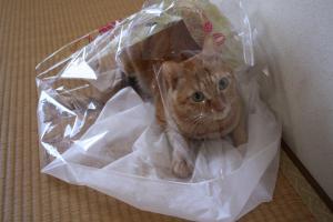 クリーニング袋とみい