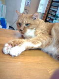 cat2.jpeg