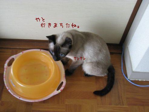 IMG_7653.jpg