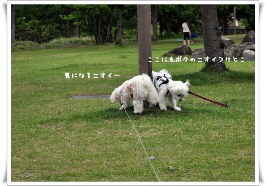 DSC_0047_20110619085237.jpg