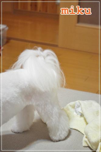 DSC_0343_20110911220005.jpg