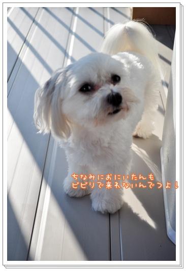 DSC_0387_20110806085011.jpg