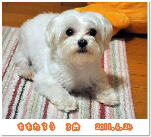 DSC_4865.jpg