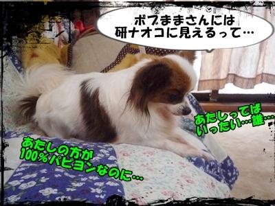 しょこP1270326