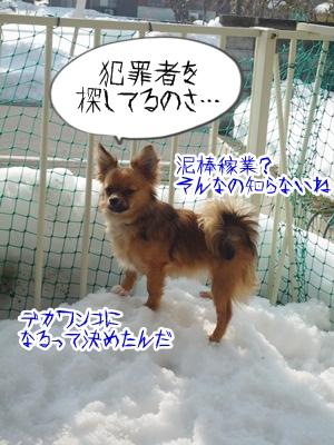雪とこそきちP1270296