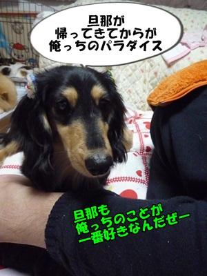 クロすけP1270976