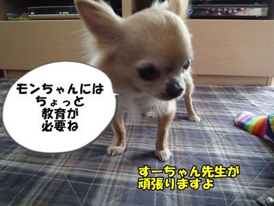 すーちゃんP1280286