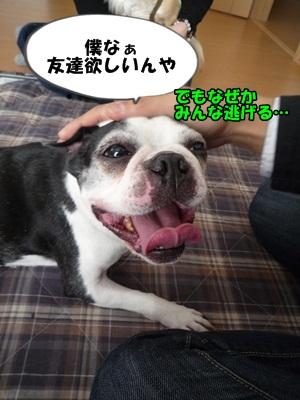 すーちゃんP1280275