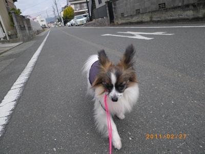 鶴寿姫IMGP0512