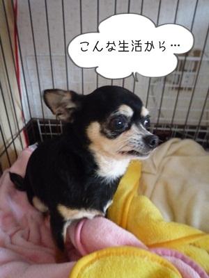 たわしP1290079