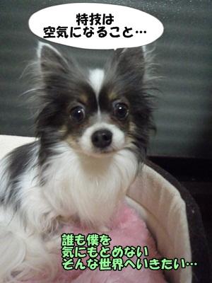 sigehikoP1280924.jpg