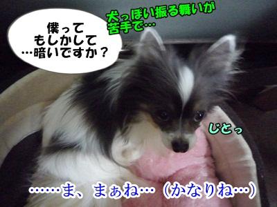 sigehikoP1280926.jpg