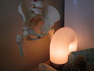 骨盤の模型
