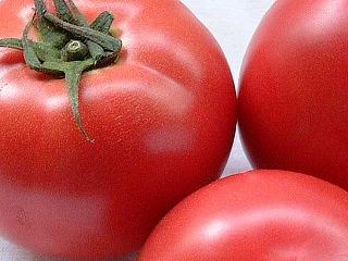 トマトは、野菜なんですよ。