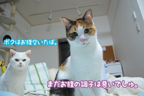 111129_病気03
